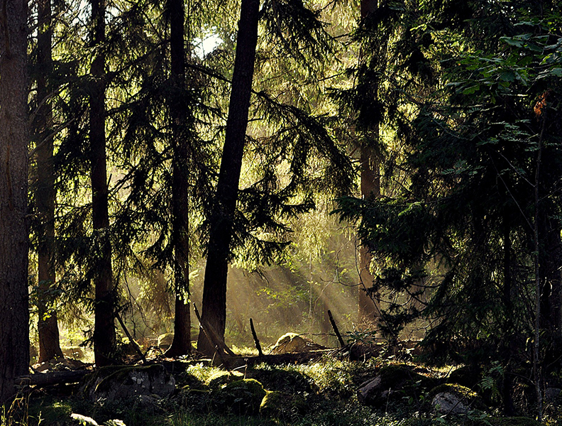 Kamperen in Zweden
