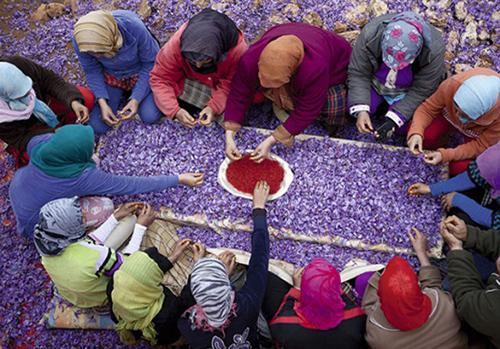 Rose Saffraan Festival